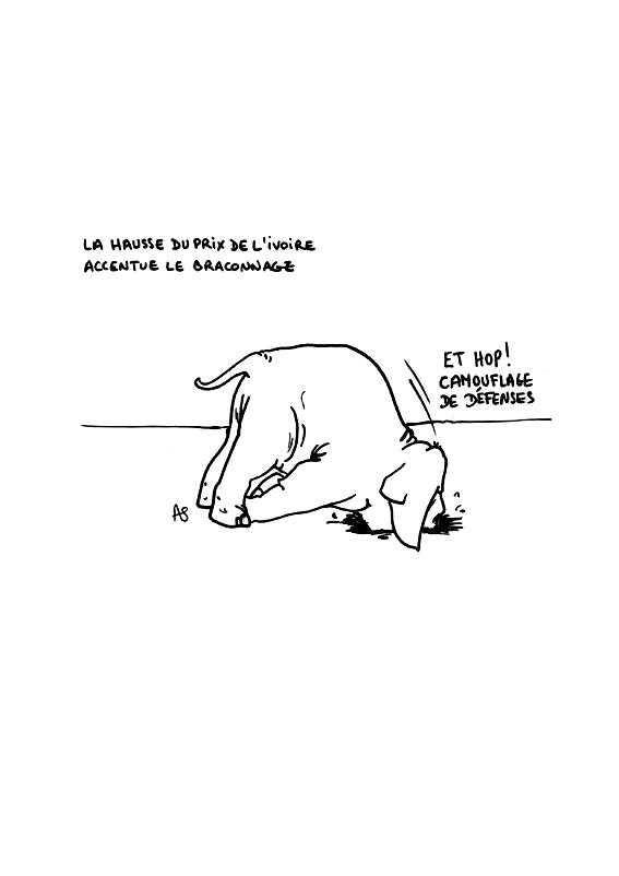 dessin de Sarah Accardi sur le trafic d'ivoire